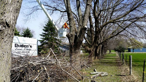 Duden's Tree Care Services
