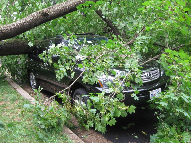 Protect Your Property With Preventative Tree Care