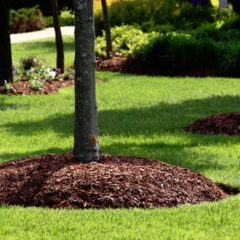6 Tree Tips To Consider